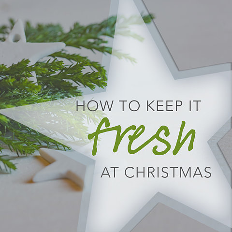 How to Survive the Christmas Season